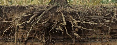 How Trees & Roots Affect Your Home Foundation | Insights