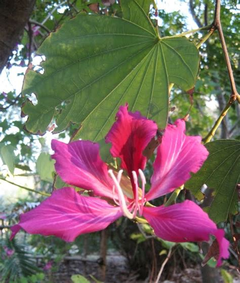Future Plants by Randy Stewart: Tropical and Dry Climate