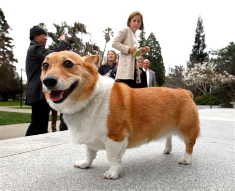 California governor's 'first dog' Sutter has died