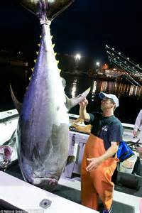 Wicked Tuna's Paul Hebert charged with falsely claiming