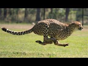 10 of the world's FASTEST ANIMALS! (Fastest on planet