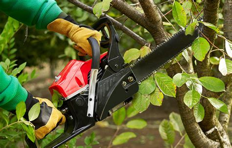 OSHA schedules meeting about hazards in tree care industry