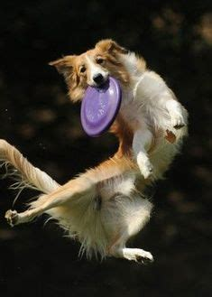 51 Dogs Jumping For Joy ideas in 2021 | dogs, jumping for