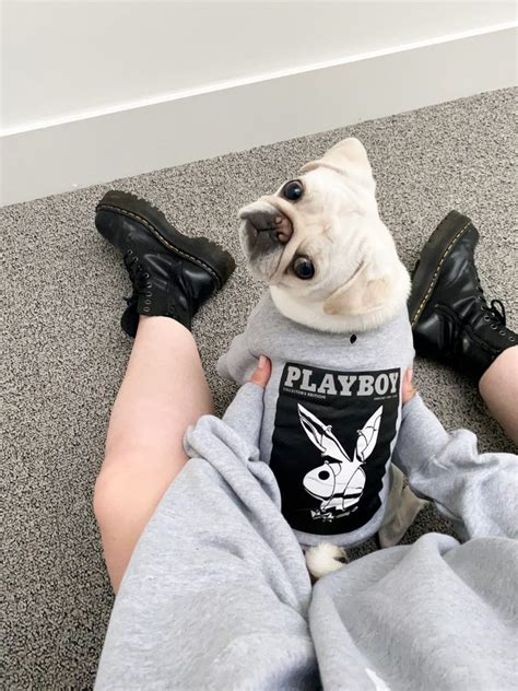Playboy dog jumpers for you and your pooch - babeZine