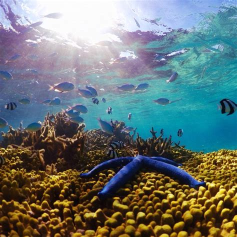 Guam Marine Life | Coral Reefs in Guam & Other Sea Life