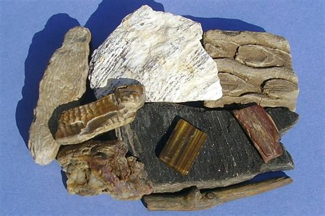Rock and Fossil Display   St