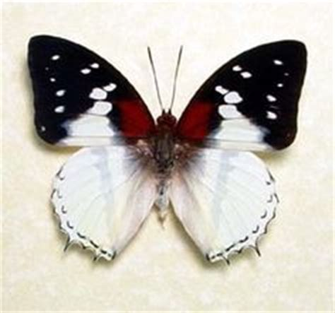 Blue butterfly, Starry nights and Costa rica on Pinterest