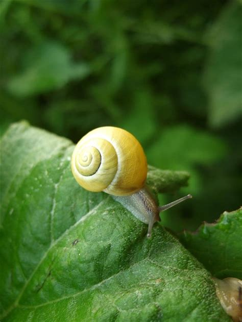 What Do Snails Eat? Leaves are Their Best Friends, Perhaps