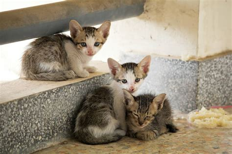 Feral cats spared, exotic pets explained and a proposed