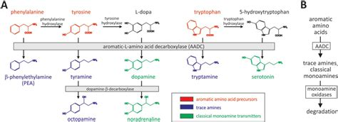 Trace Amines as possible culprit in poorly understood CNS