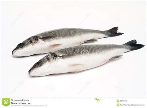 Two Fresh Water Bass Fish Isolated On White Stock Photo