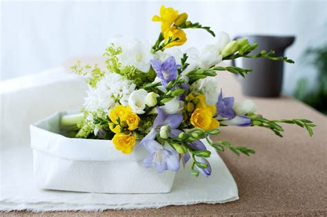 The freesia symbolises unconditional love and innocence