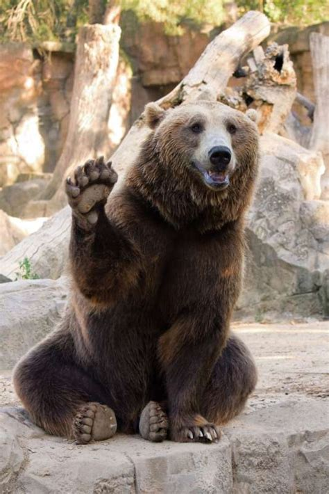Alcoholic Russian Bears Are Getting Help at Romanian Rehab