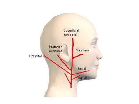 How to Remember the branches of External Carotid Artery